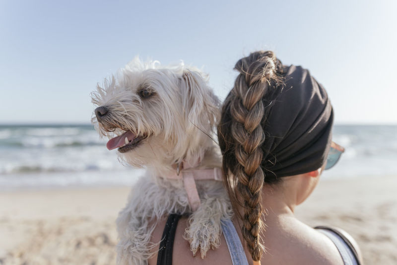 Rear view of a dog on beach