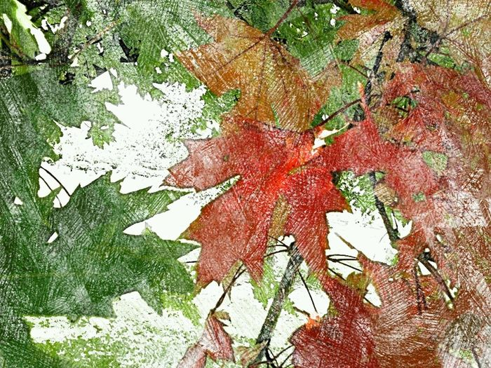 Colors Of Autumn This Is My Art!!! Getting Creative... The Wisdom Is In The Trees Not The Glass Windows