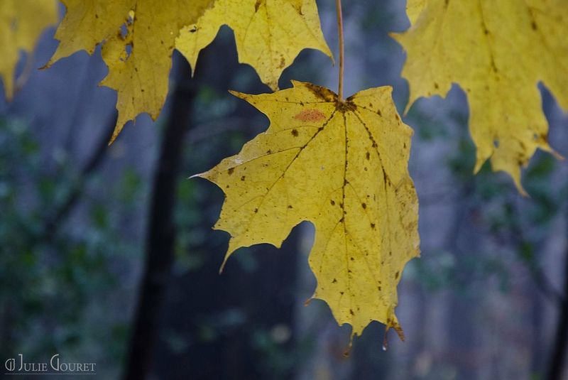 Spirit Leaf Plant Part Autumn Yellow Change Close-up No People Leaves Nature Day Plant Tree Growth Beauty In Nature Natural Pattern Focus On Foreground