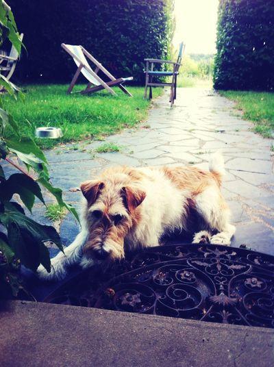 My Dog Enjoying Life