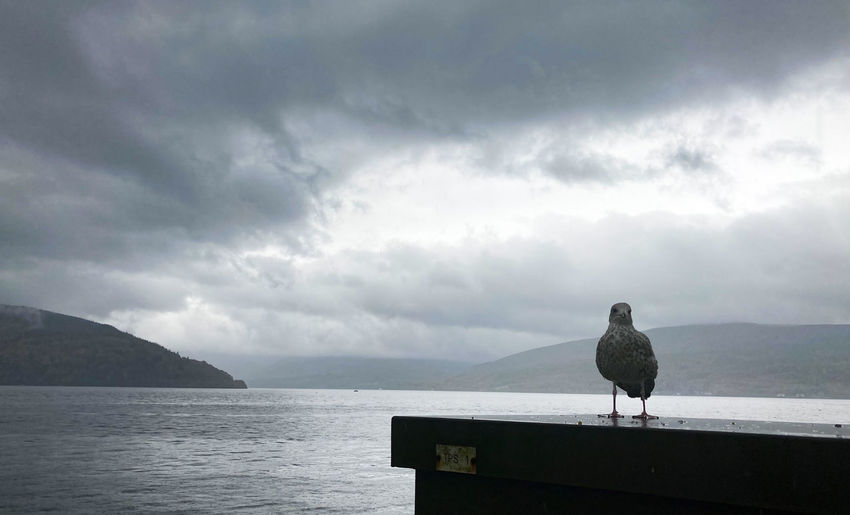 Seagull perching on a sea