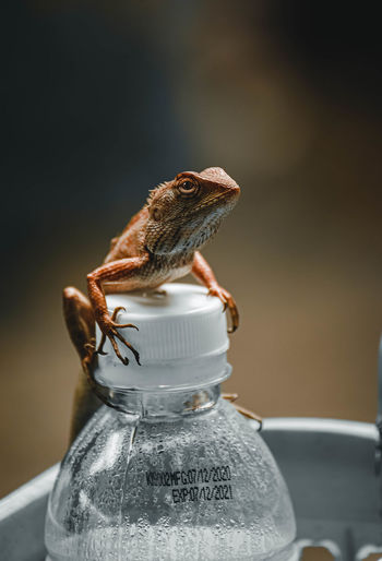 Close-up of small lizard on glass