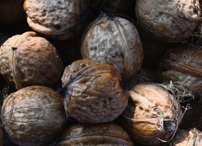 Autumn Nuts Fall Food Food And Drink Fresh Harvest Healthy Eating Pick Shell Walnut