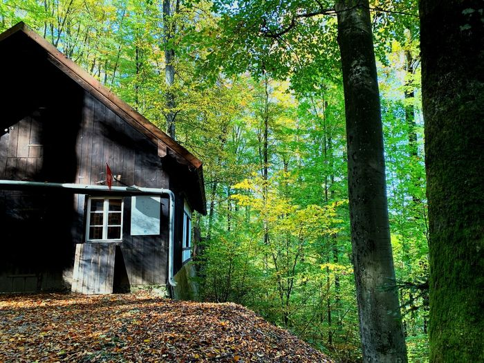 Cabin in the