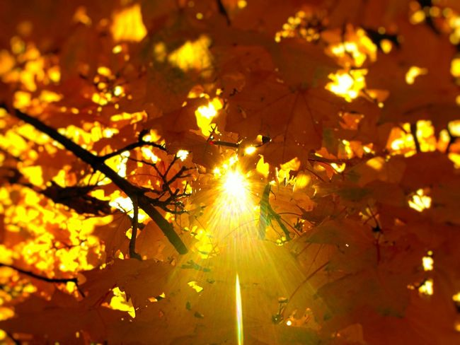 No People Autumn Fall Beauty Fall Colors Sun Star Leaves November Nature Outdoors