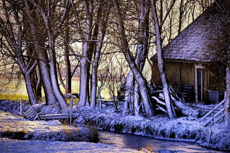 Fujifilm_xseries dutch landscape Winter Trees EyeEm Best Shots EyeEmBestPics Eeyem Nature Lover Eye4photography  Xt1