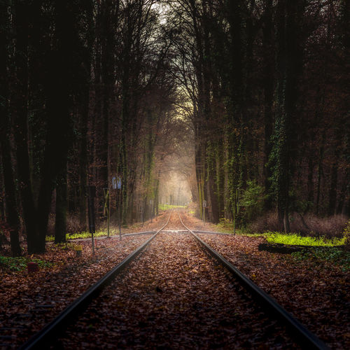 Autumn Day Diminishing Perspective Forest Morning Nature No People Outdoors Railroad Track The Way Forward Tree