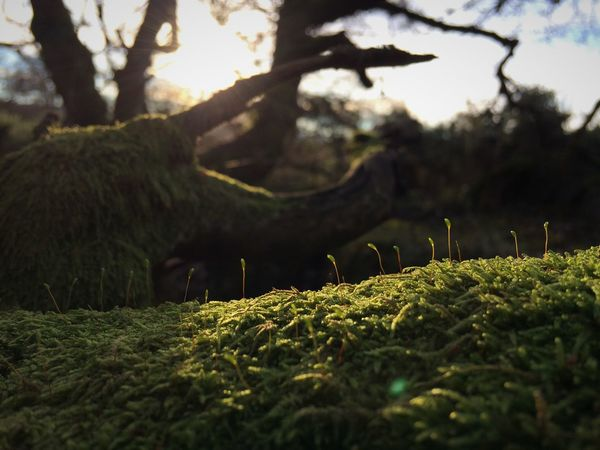 Beauty In Nature Branch Day Green Green Color Growth Moss Moss And Lichen Nature No People Outdoors Seedhead Seedling Tree