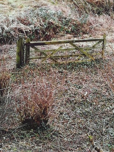 Full Frame No People Day Outdoors Backgrounds Nature Gate Rustic PhonePhotography Nature Beauty In Nature Manmade Wwtmartinmere Gate To No Where!! Gatetohappyness
