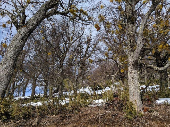 Tree Cold