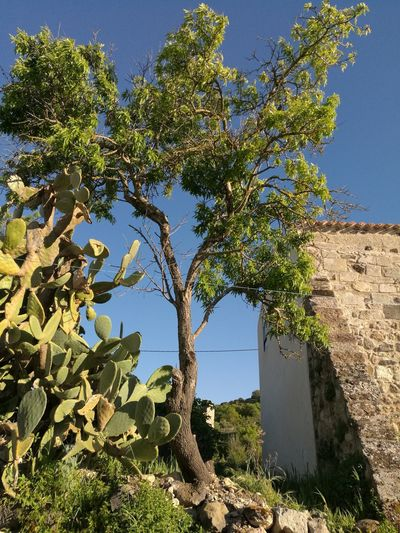 Town Abandoned Abandoned Places City House Nature Photography Nature Collection Gosthtown Trees Beauty In Nature Sardinia,italy Nature Naturephotography Panoramic Photography Nature_ Collection