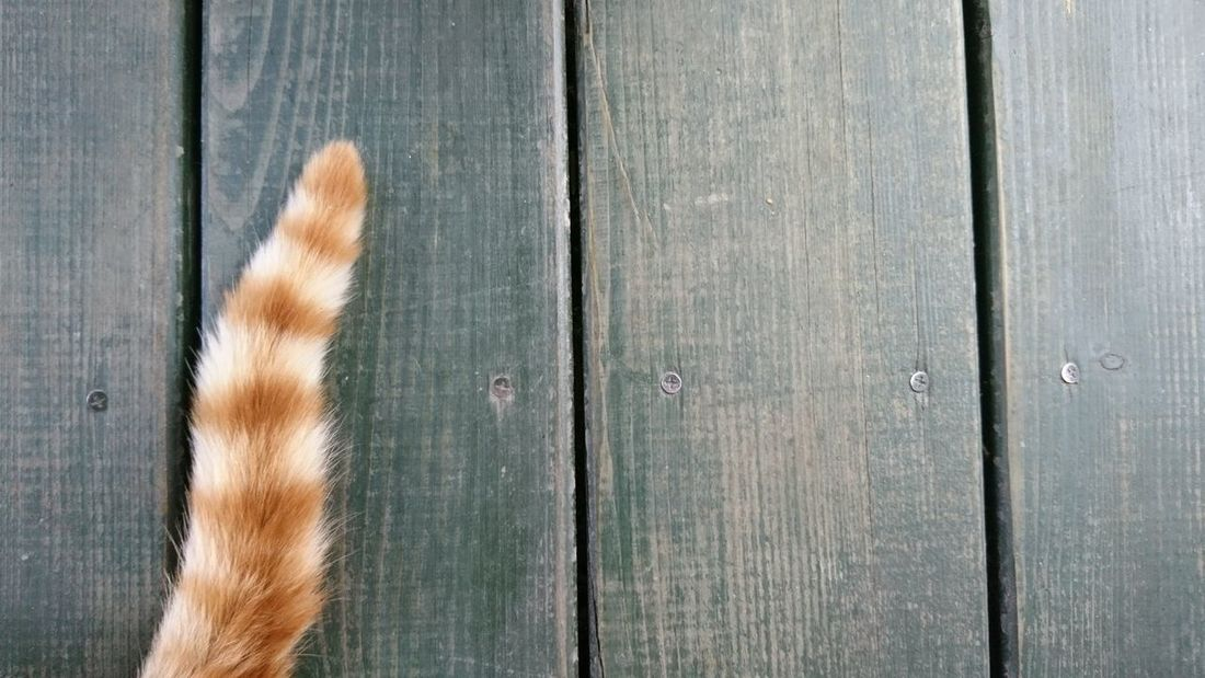 Wood - Material Outdoors Day Textured  Close-up Backgrounds No People Cat Tail Cat Tail Wooden Floor Nature