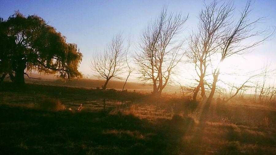 Autumn Morning Grandprime Samsungphotography Chubutmilugar