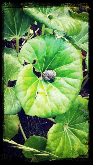 No meio da natureza e com a velocidade de pensamento de um caracol...