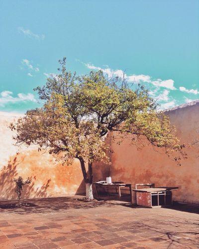 Acolman y un patio Acolman TreePorn Colors Convento Playground