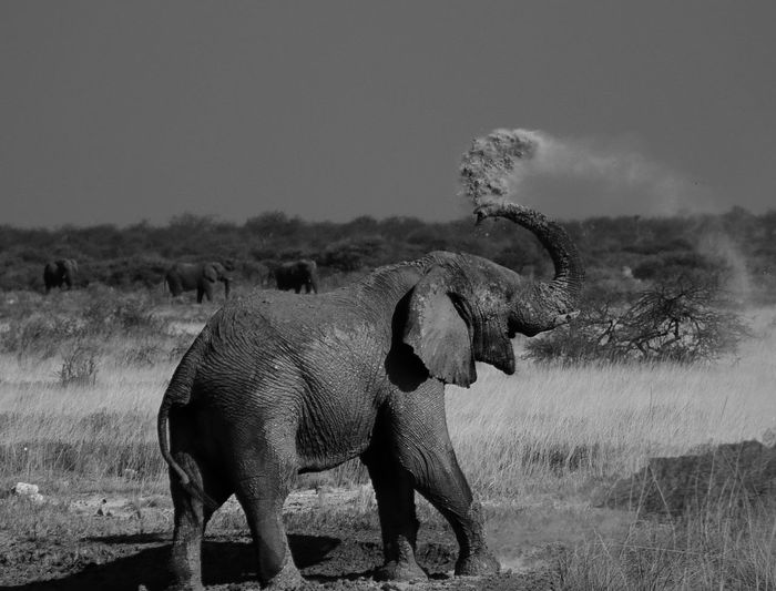 Namibia Nature Animal Themes Animal Trunk Animal Wildlife Animals In The Wild Bath Time! Beauty In Nature Canon Dust Elephant Elephant Nature Park Etosha National Park Grass Mammal Outdoors Safari Animals Tusk