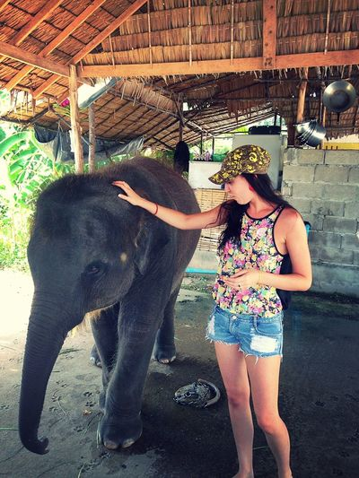 Elephant ♥ My New Friend ❤️ Best Moment