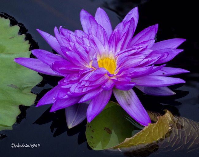 Flowers macro streamzoofamily
