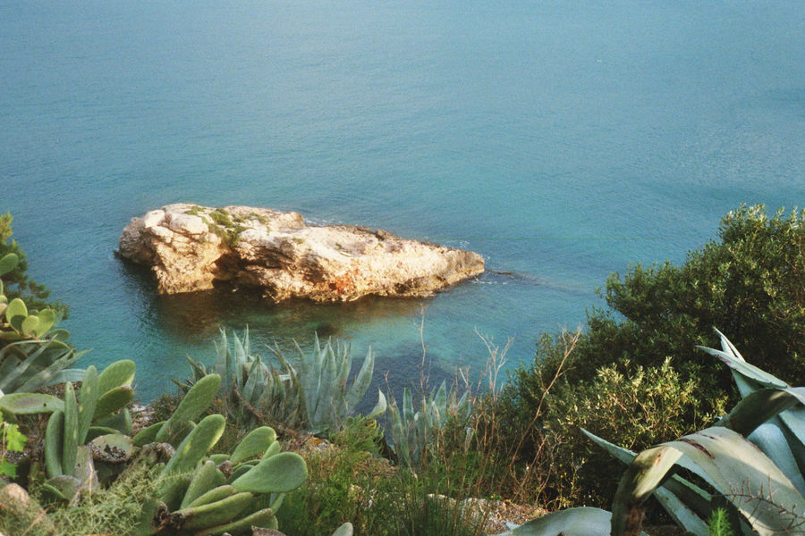 Analog Analogue Photography Beauty In Nature Cactus Day Film Photography Filmisnotdead Growth Ibiza Island Islandlife Landscape Nature No People Outdoors Plants Sea SPAIN Tranquility Water