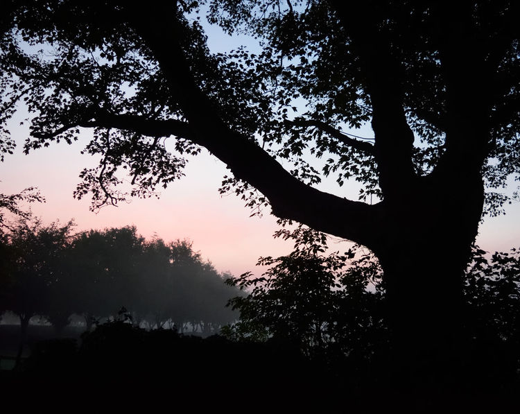 Beauty In Nature Branch Growth Irish Countryside Irish Landscape Landscape Low Angle View Mist Misty Morning Nature Outdoors Roseysky Silhouette Sillouette Soft Light Surreal Tranquil Scene Tranquil Scene Outdoors Tranquility Tree Tree Trunk Winter Dawn Winter Landscape