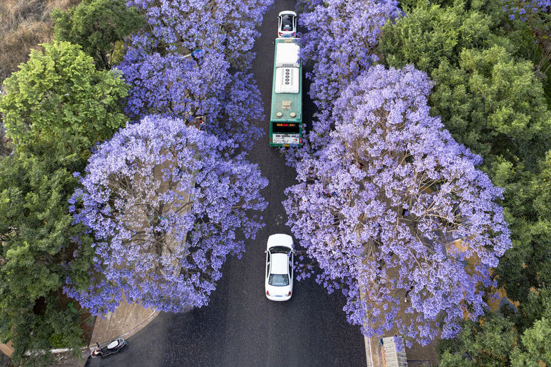 High angle view of purple flowering plants on road