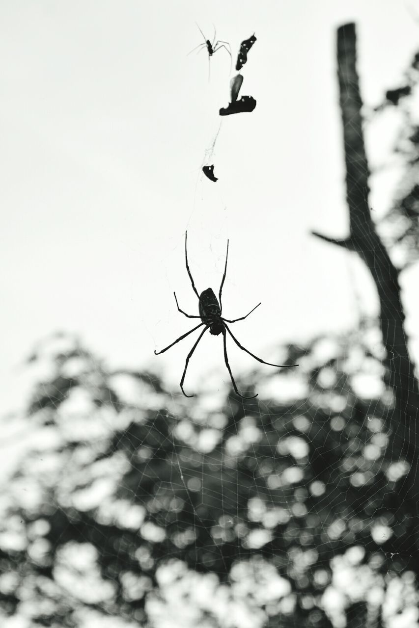 spider, focus on foreground, animal themes, spider web, animals in the wild, insect, close-up, one animal, no people, day, nature, outdoors