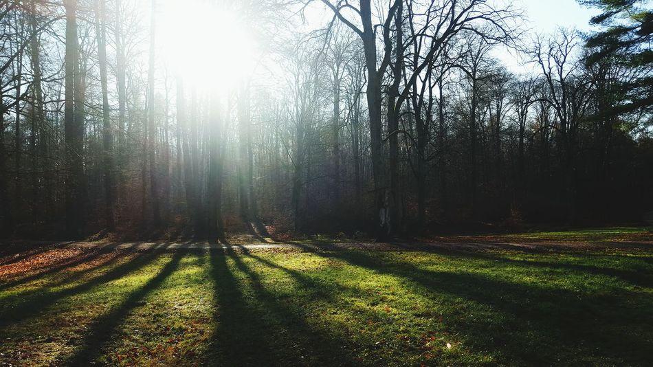 ...herrlich die frische Luft in der Natur genießen...Jogging Nature Beautiful Nature Im Wald