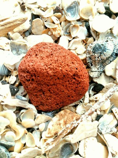 Showcase: November Red Lava From Another Island Seashells Gulf Of Mexico
