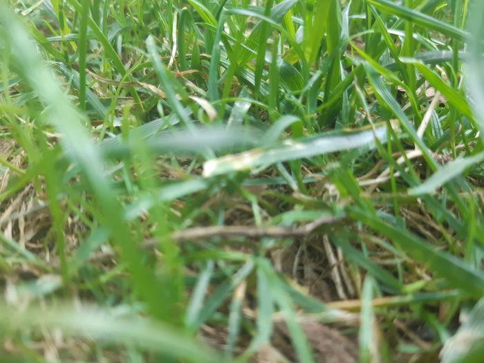 Field Close-up