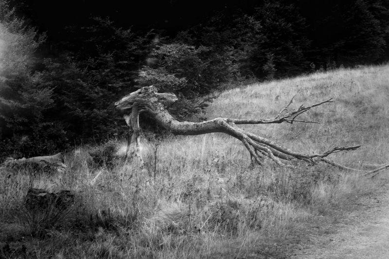Tree Bird Grass