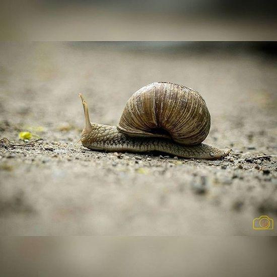 Schnecke Natur Schneckenhaus Boden Bestoftheday Picoftheday Tier Zeit Grau Tierwelt Slug Snail