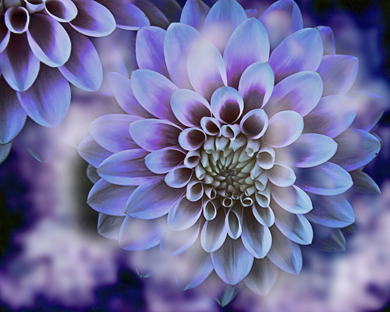 flower, petal, fragility, flower head, beauty in nature, nature, freshness, growth, purple, focus on foreground, close-up, plant, outdoors, day, blooming, no people
