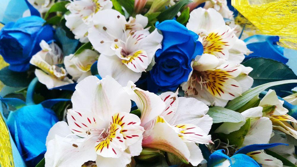 Valentine's Day  Heart's Desire Bluepetals Freshness Flower Blueroses Thankyoubibi I Love You Somuch