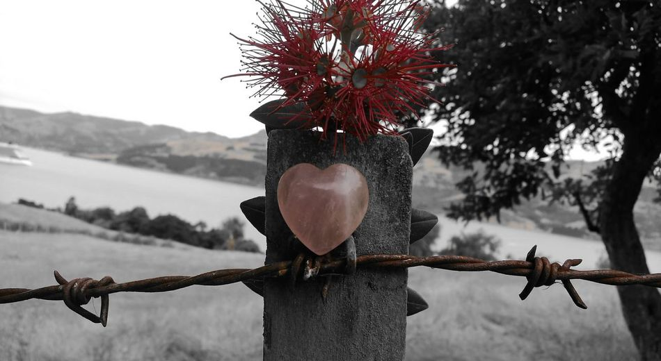 Photography Trying New Styles New Zealand Scenery Beauty Lonely Heart