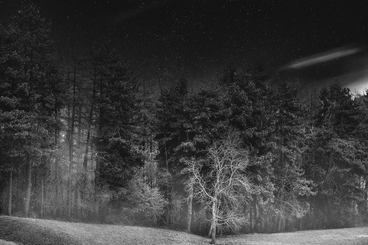 Monti Lessini Beauty In Nature Blackandwhite Forest Growth Landscape Nature Night No People Outdoors Scenics Stars Tranquil Scene Tranquility Tree