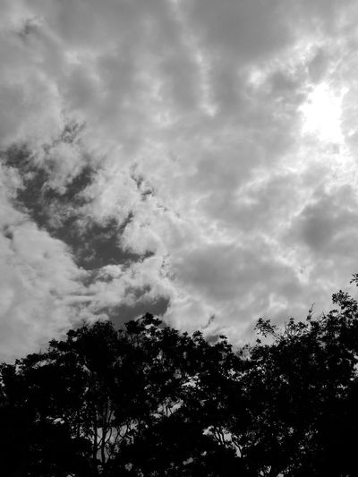 cloudy day !!! #clouds #sunset #nature #sunlight #beautiful #Black&White #clouds #cotton #sunny #love #blackandwhite #trees  #FollowMe #followme #like #love #followher #eyemnaturelover #Follow #Follow #Follow  #eyemselect# I Love Photography #picture #love #space #eyeem #chillout #picture #EyeEm EyeEm Gallery Low Angle View Tree Sky Nature No People Outdoors Day
