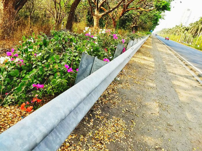 india Growth Flower Nature Plant No People Outdoors Day