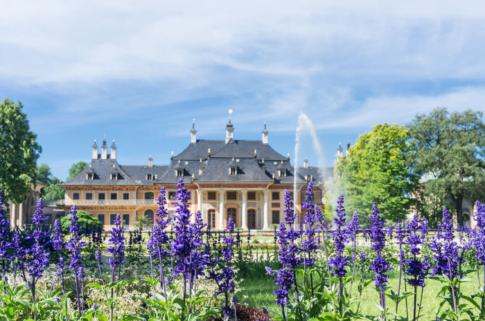 Castle Dresden Dresden / Germany EyeEmNewHere The Week On EyeEm Travel Your Ticket To Europe Architecture Beauty In Nature Building Exterior Built Structure Cloud - Sky Day Flower Fragility Freshness History No People Outdoors Pillnitz Plant Purple Sky Travel Destinations Tree