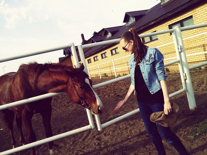 People Watching horses Love You
