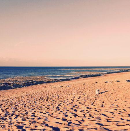 Hello Sunshine Holidays ☀ Ile D'Oleron Plage 🌴 Ilovemydog Isis😍 Myprincess🐶🐶