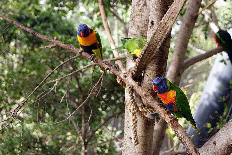 compañeros de aventura en canarias Nature Love Brids Colors