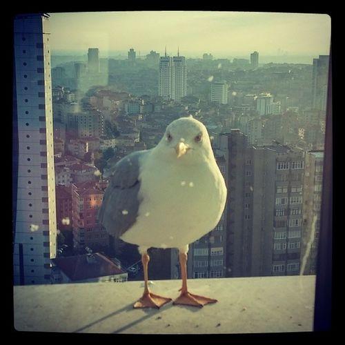 Bugün martı kardesle uzun uzun bakistik ? Seagull Martı  ıstanbul Cityofcats cityofbirds