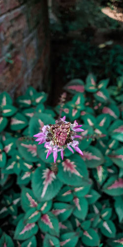 Close-up of purple flowering plant