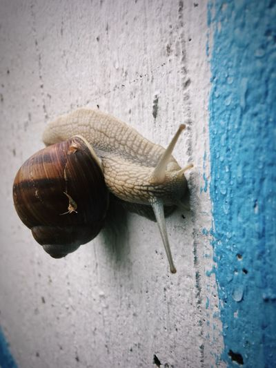 Hello buddy. Snail Animal Close-up
