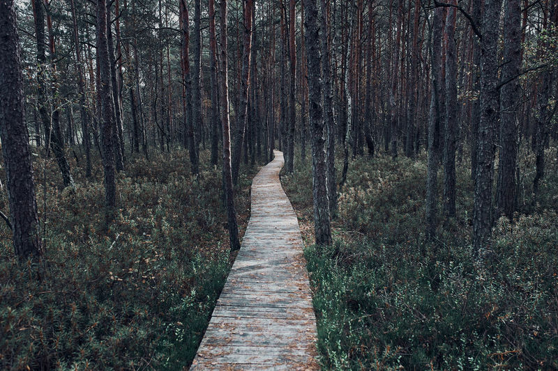 Wooden path leading through the swamp and forest in a natural park. autumn forest landscape