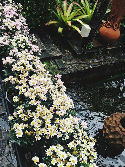 Flowers Flowers, Nature And Beauty Plant Flower Growth Flowering Plant Nature Water Day Beauty In Nature