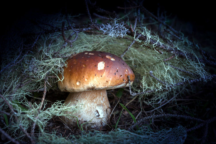Close-up of mushroom growing in forest