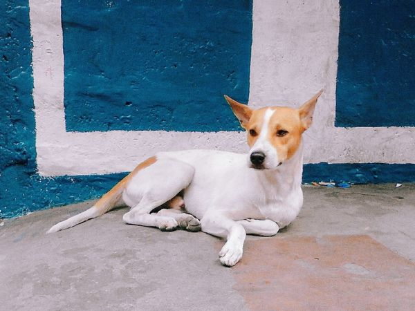 Dog 犬 Cute かわいい