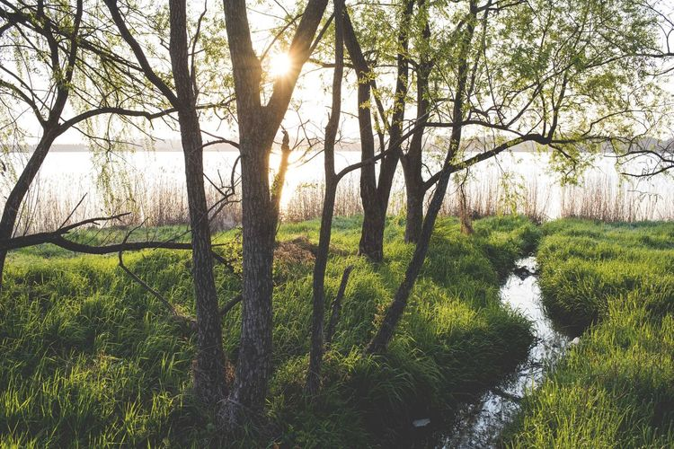 Beauty In Nature Forest Grass Green Color Growth Landscape Nature No People Outdoors River Scenics Sky Tranquil Scene Tranquility Tree Water