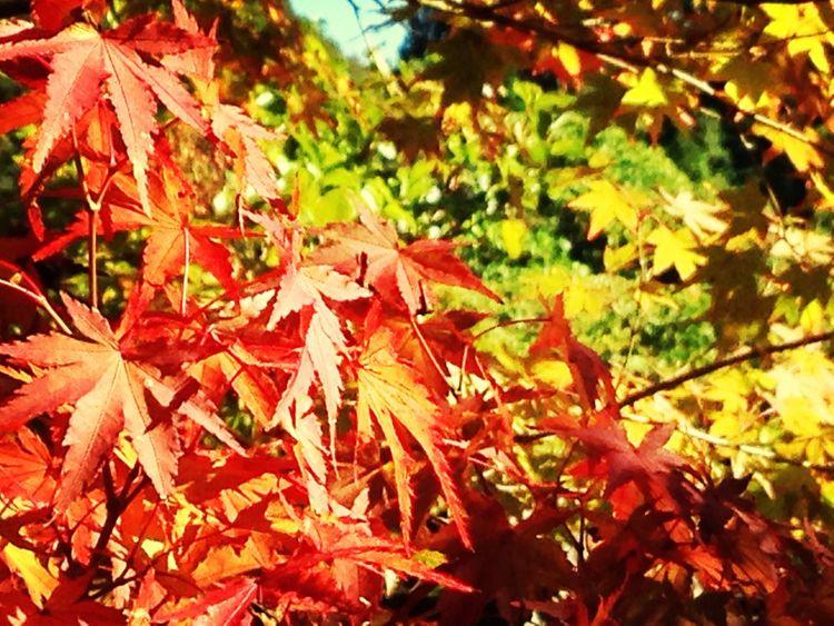 Peace And Love Autumn Nature 秋色が好き^ ^